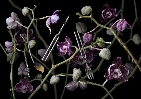 Orchidea diapasona · © Olaf Bruhn 2016