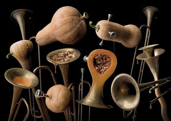 Butternut Trumpet · Copyright by Olaf Bruhn