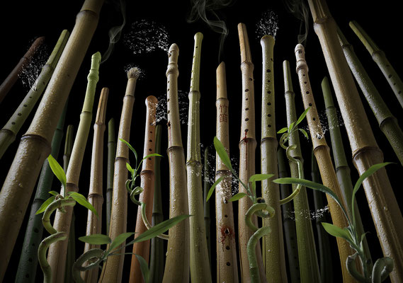 Bamboo flute forest · © Olaf Bruhn 2016