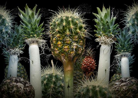 Ananas suculentus © Olaf Bruhn 2018
