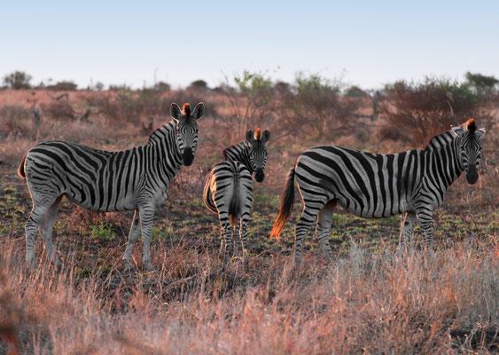 Botswana · Copyright by Olaf Bruhn