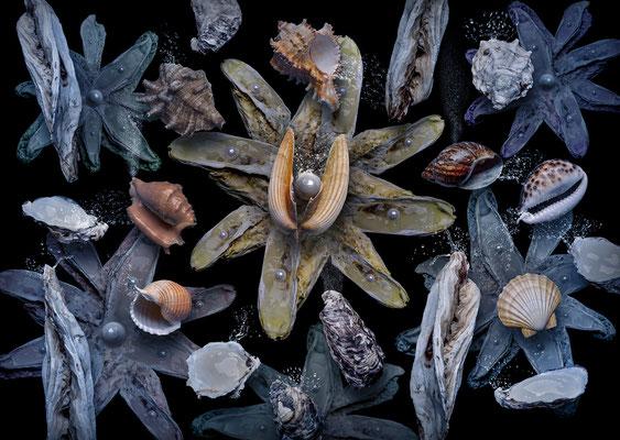 Austernblume © Olaf Bruhn 2018