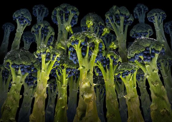 Blueberry Broccoli · © Olaf Bruhn 2019
