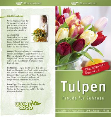 """BLUME 2000 - Kompetenzflyer """"BlumenWissen"""" :: Rücktitel & Titel"""