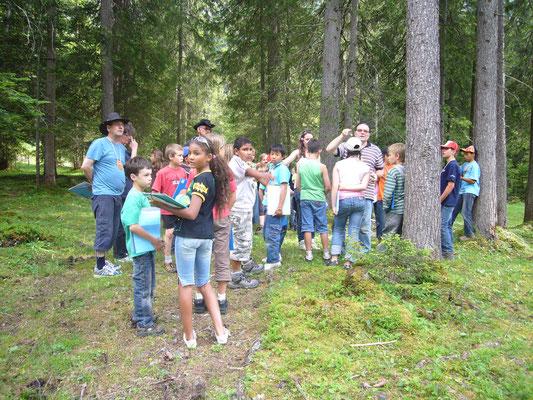 Baumzeremonie im Wald