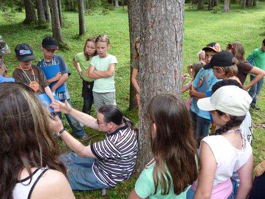 Anleitung für die Baumzeremonie