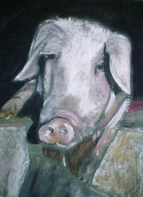 """""""Schwein Piggy"""" - Pastell, 34 x 25, 2003"""