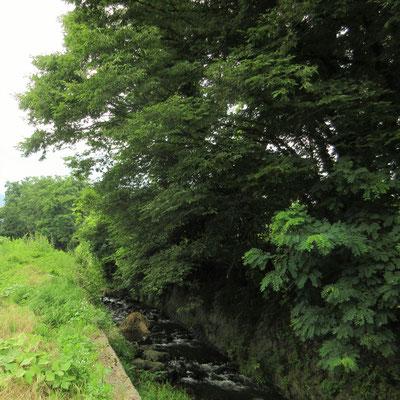 金井河原の虫聲