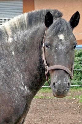 Zottel, geboren vermutlich 2002, kam im September 2005 zu uns. Aufgrund einer nicht mehr behandelbaren Kolik und ihrer Folgen musste er uns plötzlich und unerwartet am 20. März 2014 verlassen.