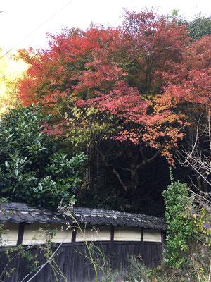 布一途の紅葉
