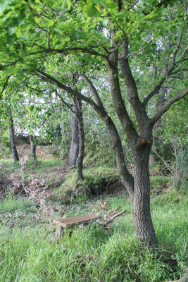 Aprile: girovagando per il bosco