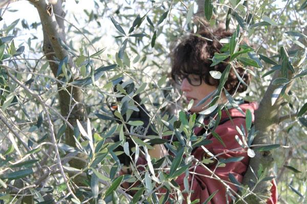 Marzo: potatura delle piante di olivo