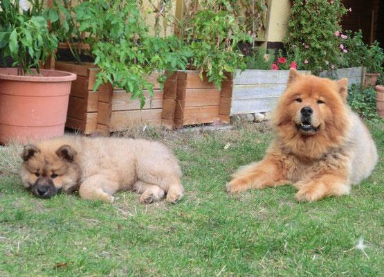 Ronja & Shiwa (Sept. 2012)