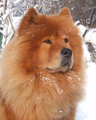 Shiwa im Winter 2004