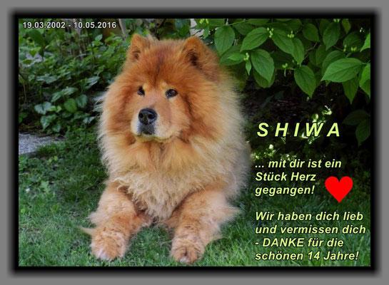 Shiwa im Mai 2016 (wenige Tage vor ihrem Tod)
