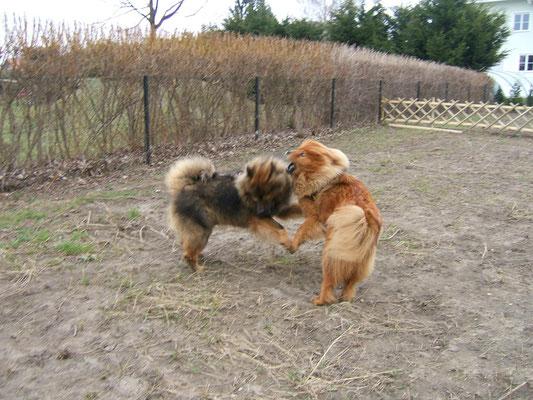 Arras & Shiwa spielten am liebsten miteinander ... (April 2005)
