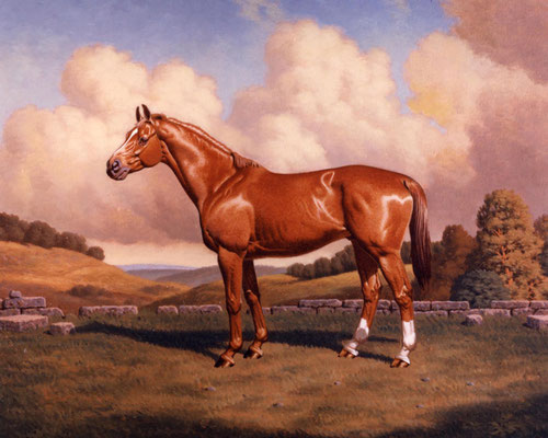 Probon - Horse Portrait in Oi by Peter Schaumann