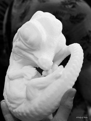 Synchrotron Grenoble - Embryon de crocodile généré avec une impriante 3D