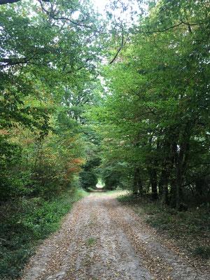 Unterwegs in den Wäldern rund um das Ferienhaus..