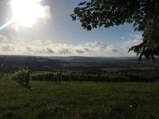 Aussichtspunkt beim Wintringerhof in Bliesransbach auf das Bliestal!