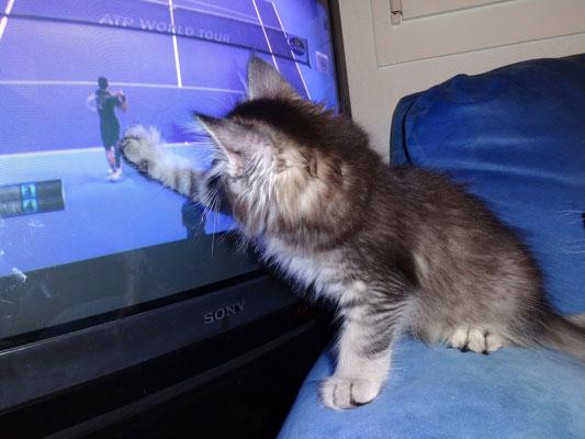 Auch Vero ist gegen Djokovic, doch trotzdem gewinnt er gegen Federer...