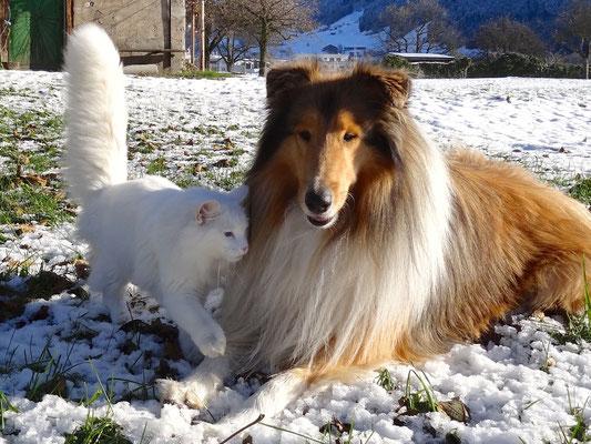 beste Freunde 1. Dezember 2013