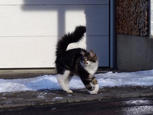 Kleiner Rowdy im Schnee, 3.2.15