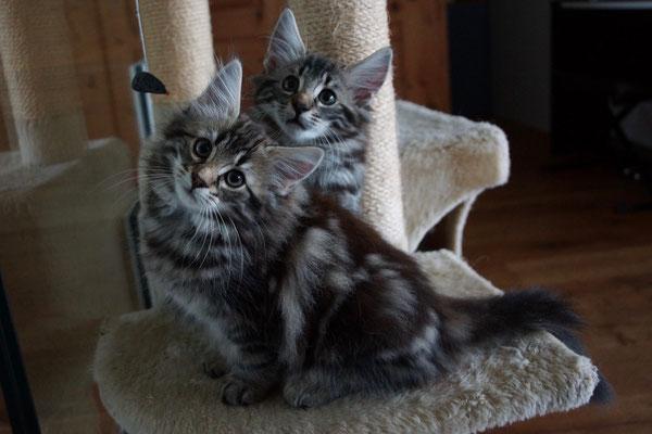 Frisbee und Filaya, 11 Wochen alt