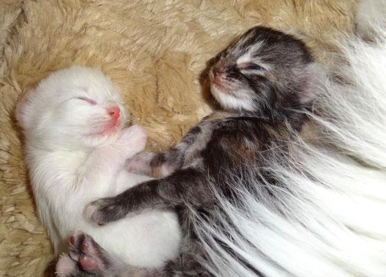 Djordy und Djamila, 8 Tage alt