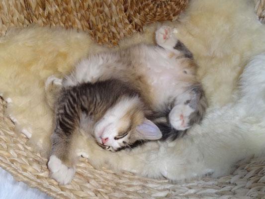 12 Wochen alt, glücklich am Schlafen… 26.11.2014
