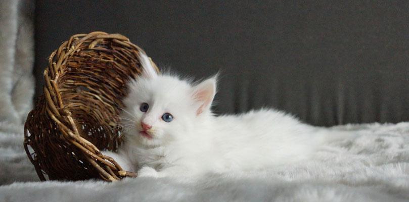 fast 6 Wochen alt