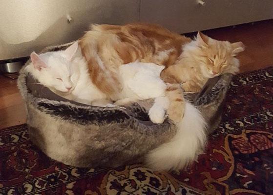 Kuschelstunde mit seinem Bruder Djordy, 7 Monate alt