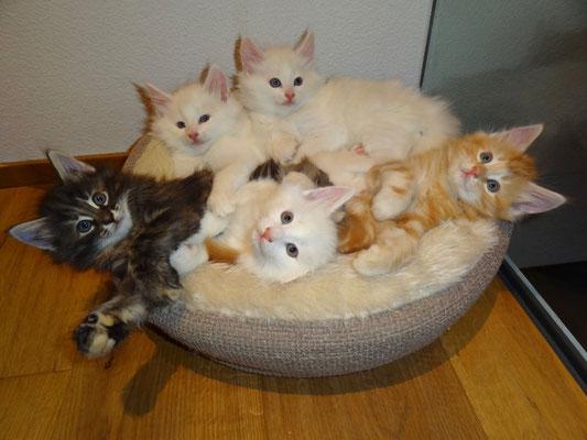 vorne von links: Djamila, Dusty, Dingo, hinten von links: Dempsey und Djordy