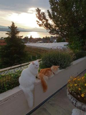 Sonnenuntergang für Dingo und Djordy
