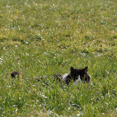 versteckt im Winter-Gras...