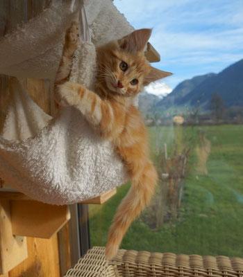 da kann man herrlich klettern