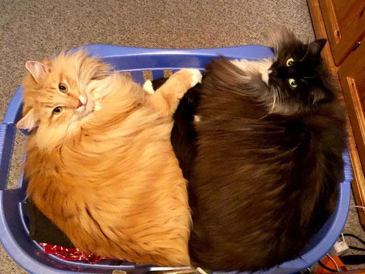 frische Wäsche ;-) Candy und Caspar mit 2.5 Jahren