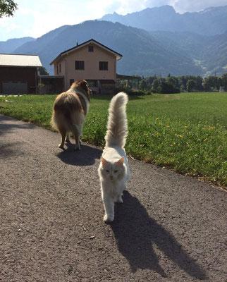 Flöckli holt mich vom Spaziergang ab, 21.6.17