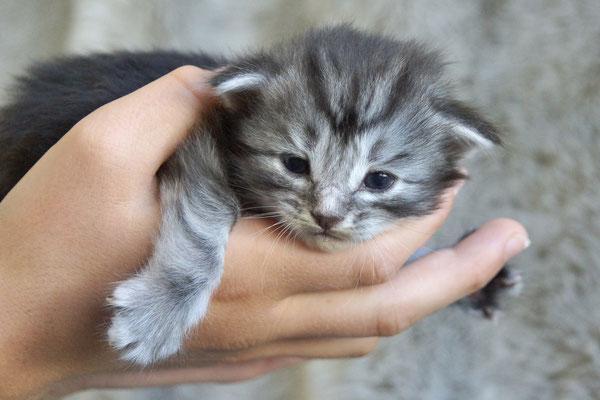 2.5 Wochen, gemütlich in der Hand