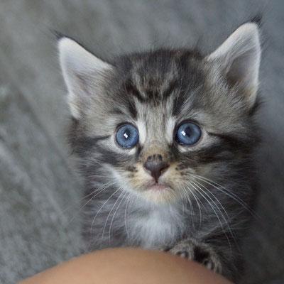 1 Monat alt - er kann schon fast hypnotisieren mit seinem Blick
