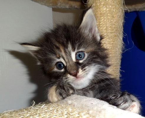 hallo! hier bin ich!!! 5 Wochen alt