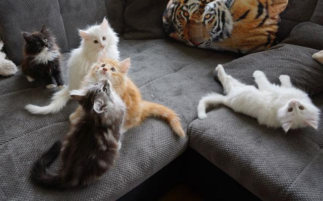 Candy, Calaya, Caspar, Caruso und rechts Cilla, 16.11.16