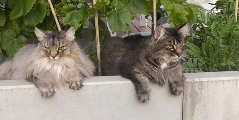 Vero und Valino, 7.5 Jahre alt, Frühling 20