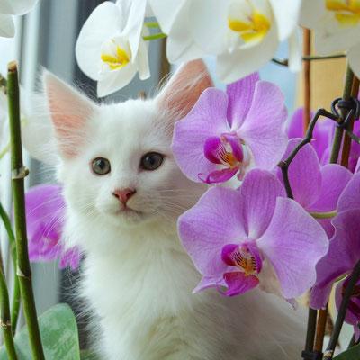 Ausflug in die Orchideen