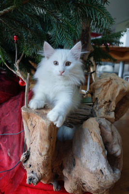 Sie freut sich, dass wir extra für sie den Christbaum aufgestellt haben! 23.12.16