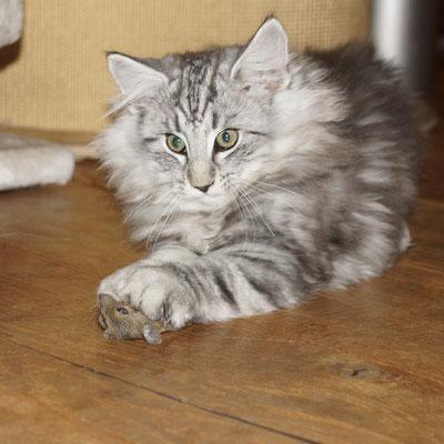 Eyla hat die Maus gebracht, Moira lange mit ihr gespielt; Gizmo hat sie ihr abgenommen....