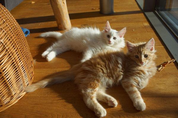 Dingo und Djordy, 12 Wochen alt