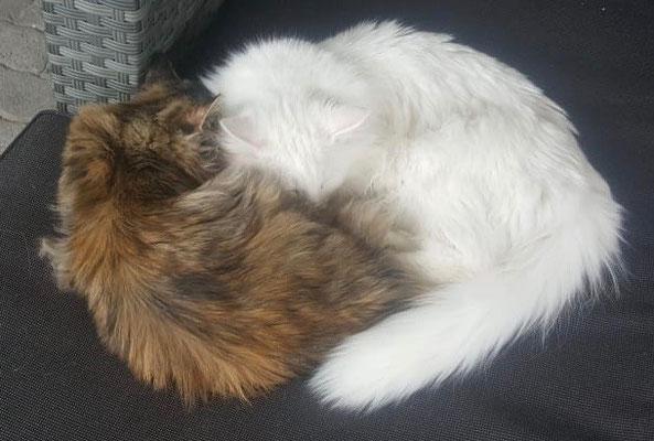 grosses Kuscheln mit seiner Schwester, 8 Monate alt