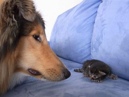 Kätzchen prägen