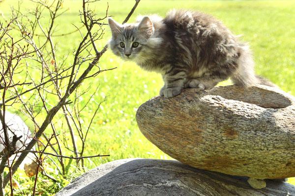 Auf dem Brunnen im Garten